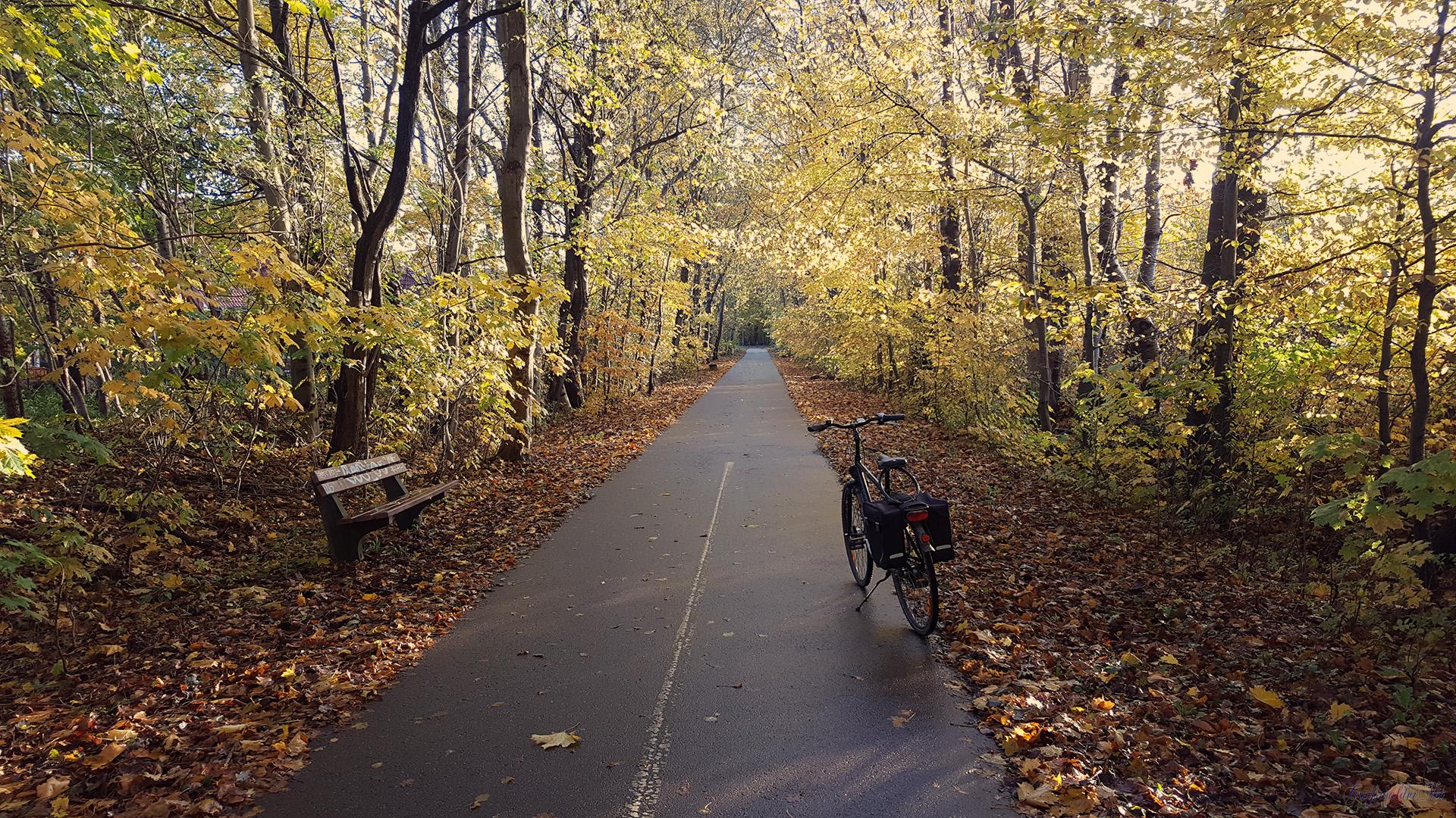 Herbststimmung in der Pappelallee in Greifswald
