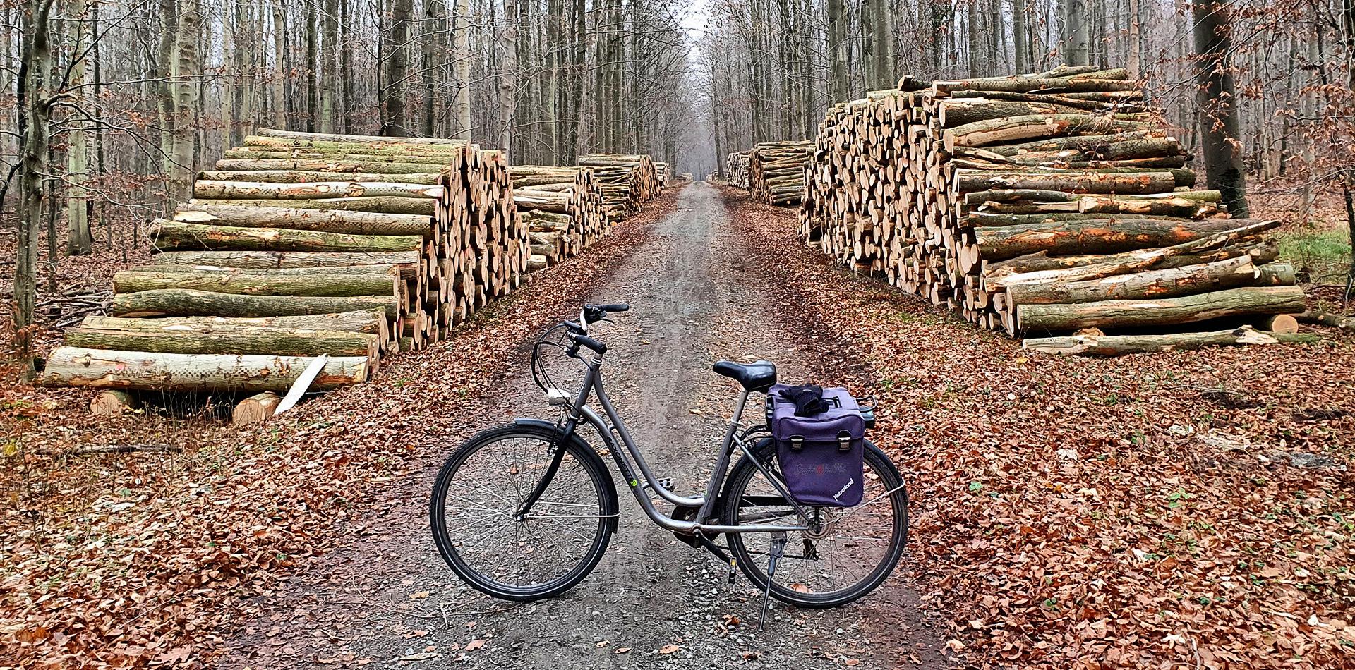 Fahrradtour im Elisenhain, Elisenhain im Naturschutzgebiet Eldena, Wald im Südosten der Hansestadt Greifswald in Mecklenburg-Vorpommern