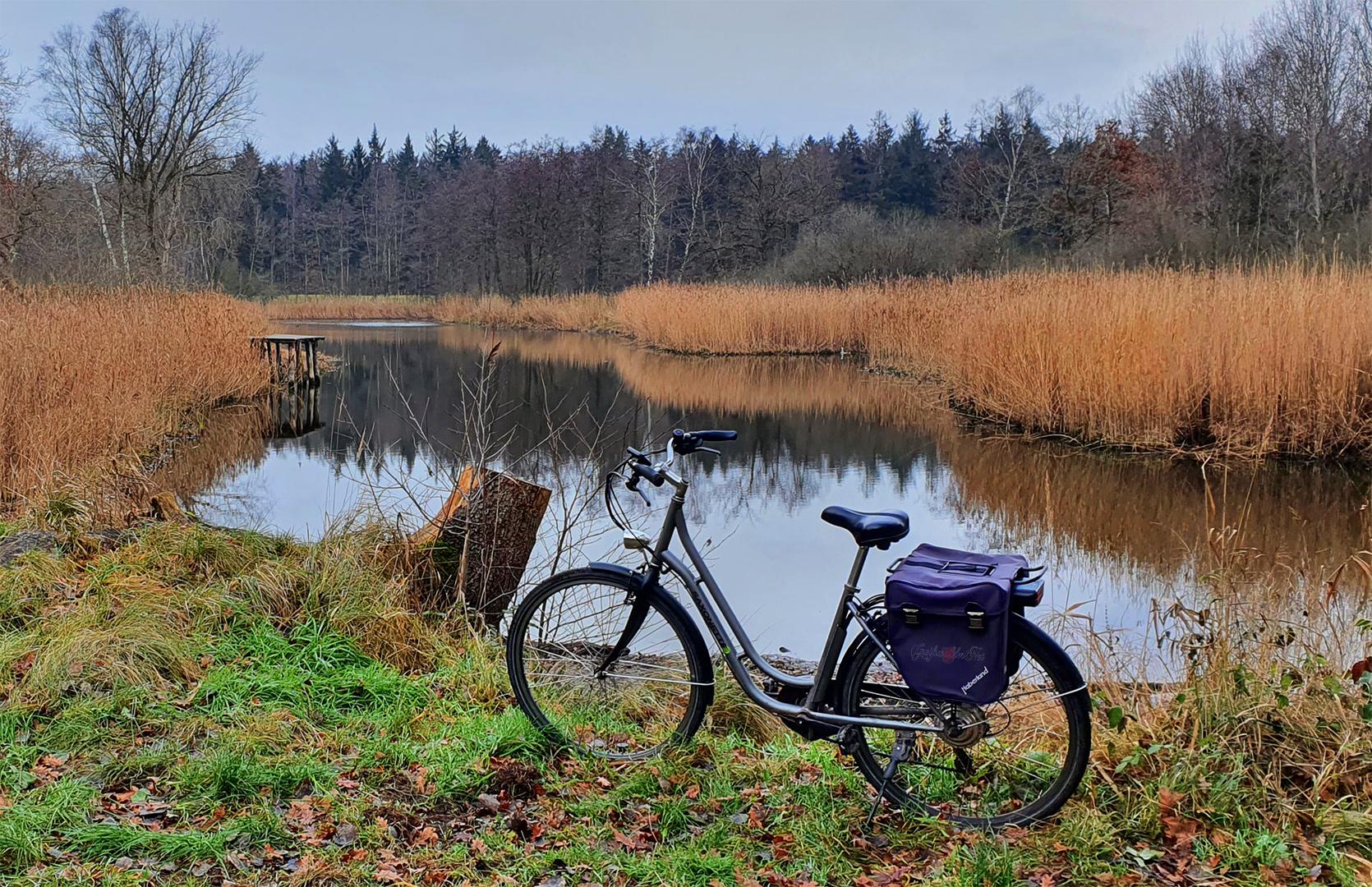 Ruhe am Waldsee