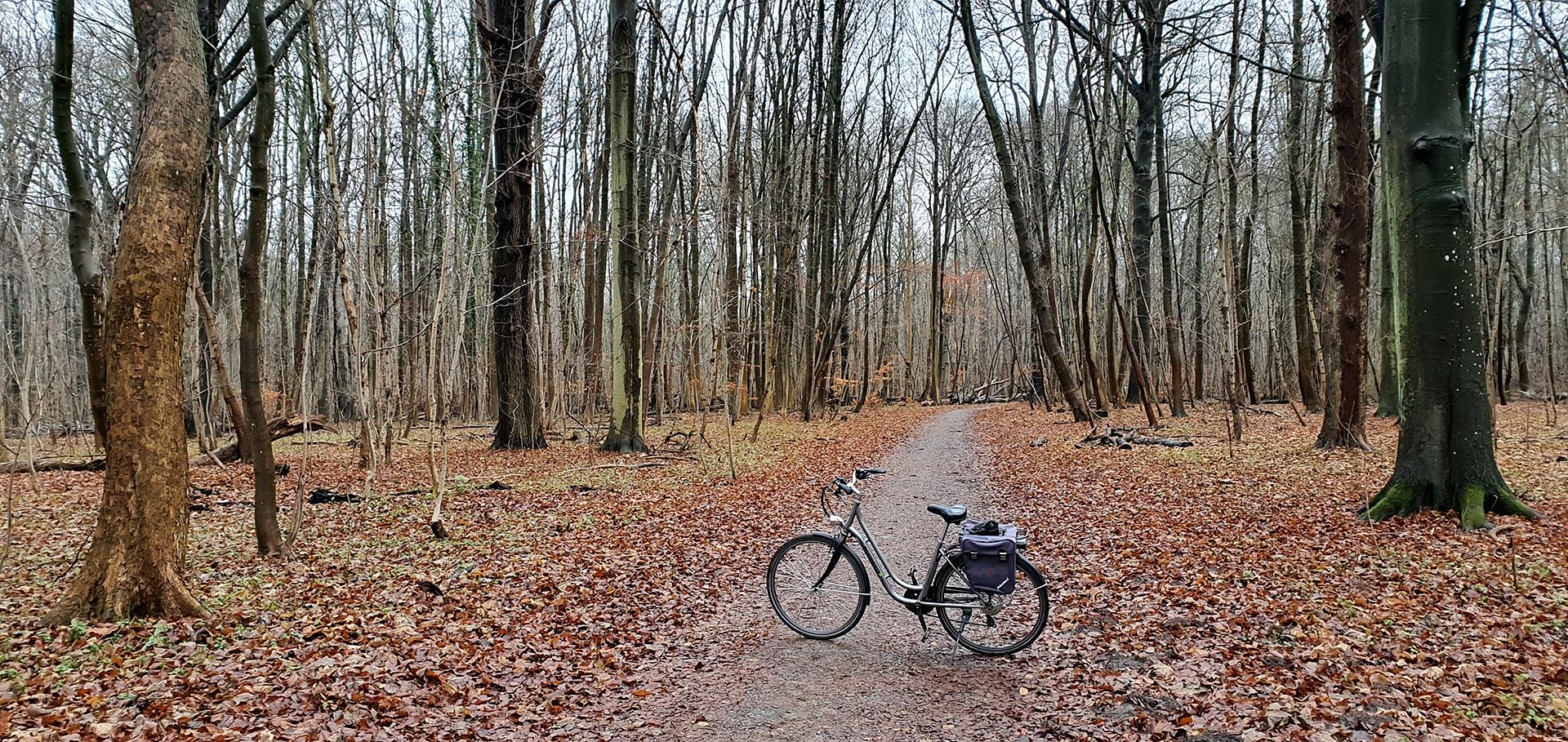 Kein Winterwald, trotzdem schön und erholsam, Elisenhain im Naturschutzgebiet Greifswald-Eldena