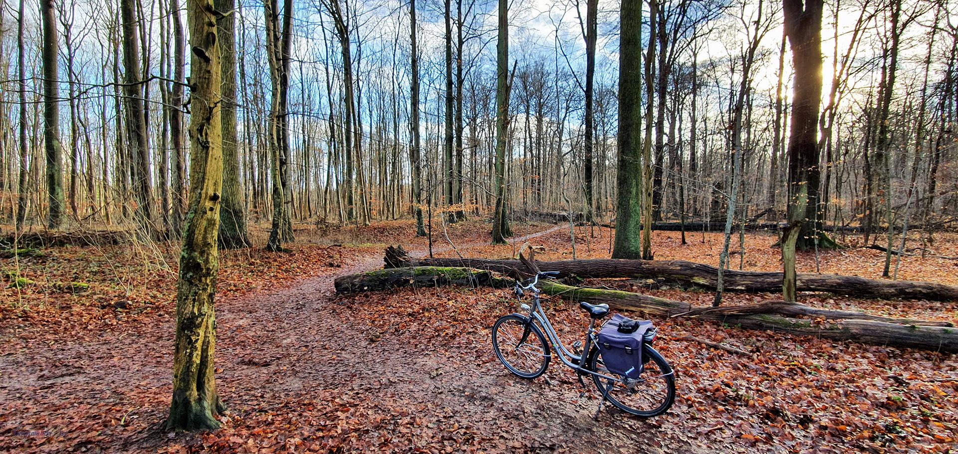 Fahrradtour durch den Wald, Elisenhain im Naturschutzgebiet Eldena, Wald im Südosten der Hansestadt Greifswald in Mecklenburg-Vorpommern