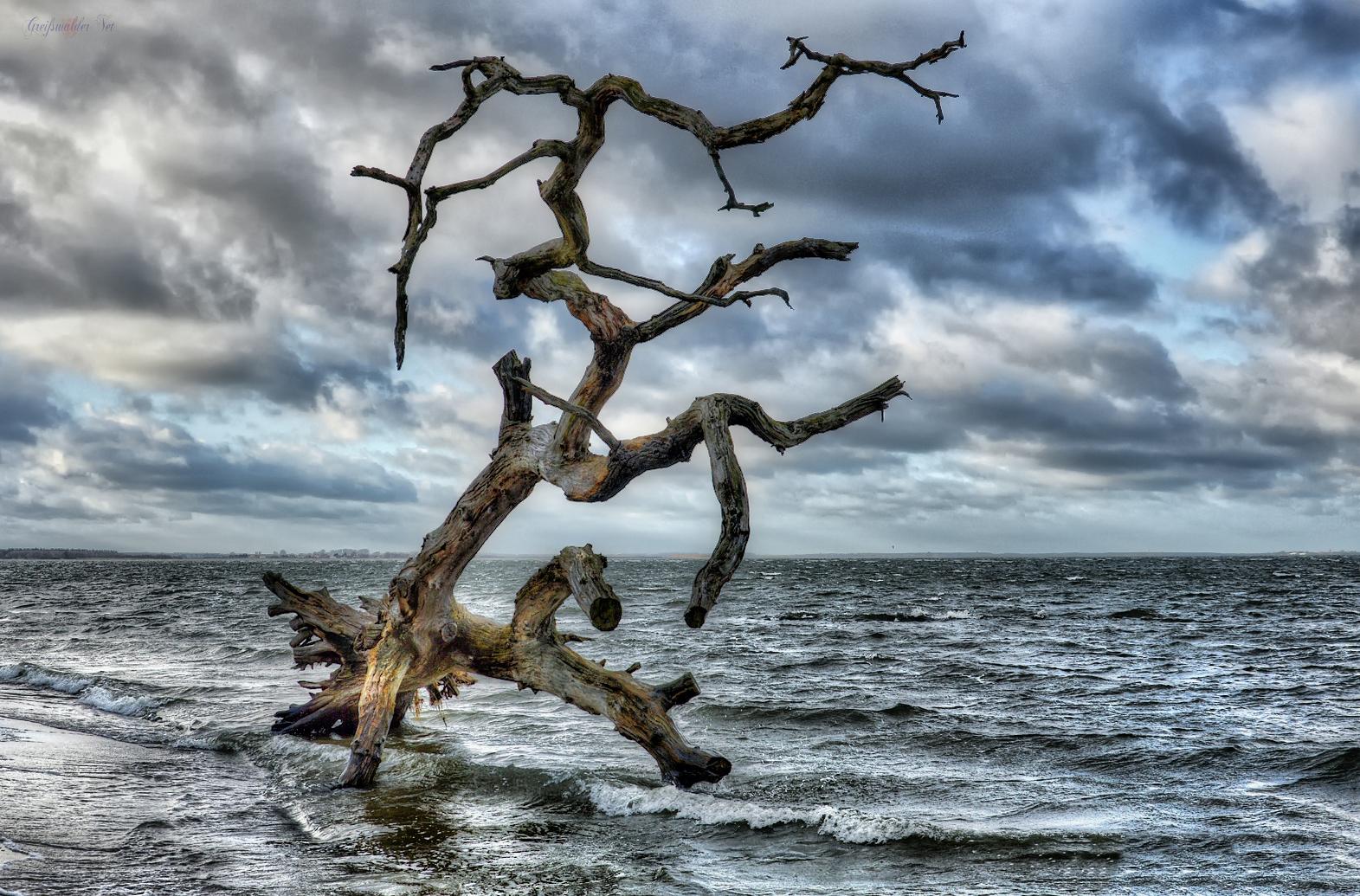 Baum am Greifswalder Bodden