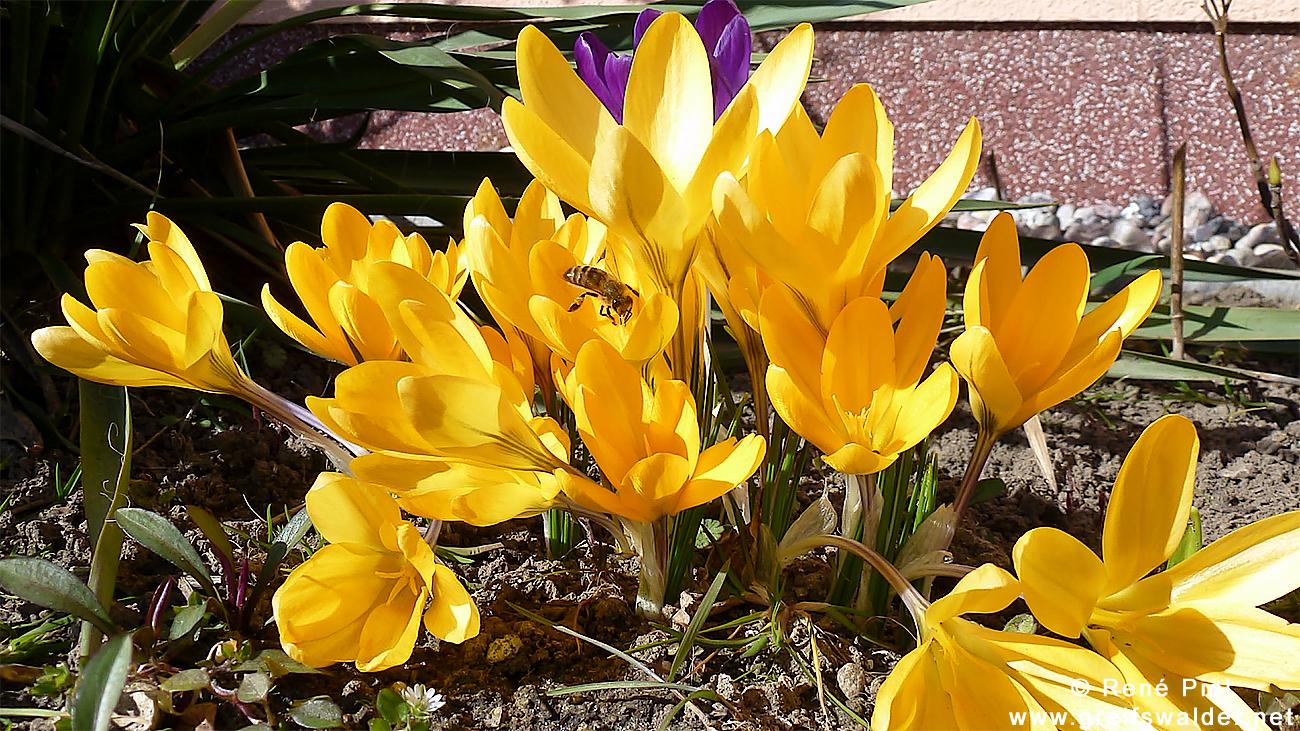 Vorfrühlings-Blumengruß