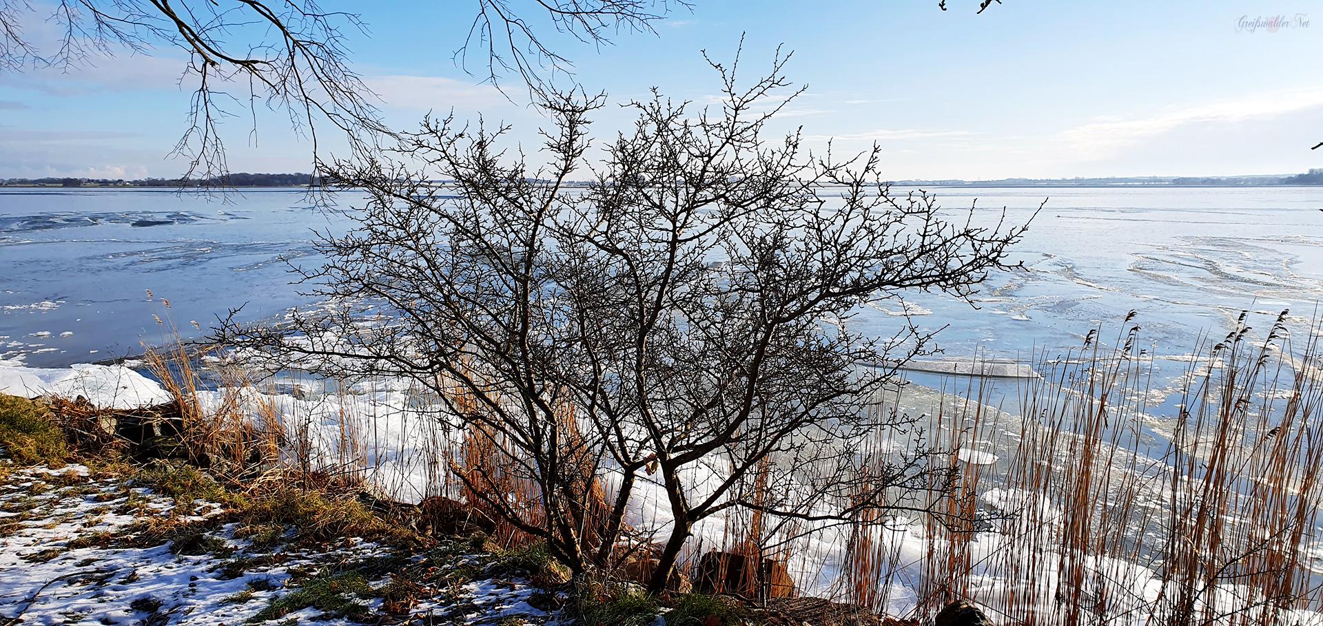 Winterstimmung an der Dänischen Wiek in Greifswald-Wieck